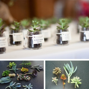 wedding-succulent-favors-1