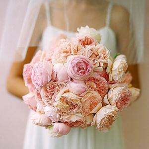 martha_stewart_cabbage_roses-795986
