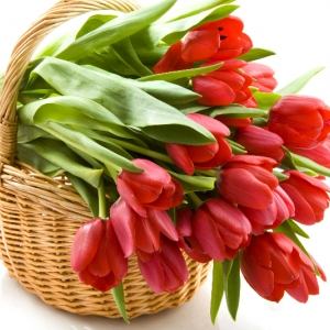 buket-tulip5
