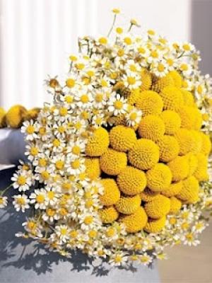 crasedia_bouquet_40