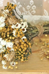 dried_flowers_26