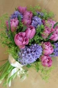 hyacinth_12