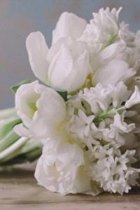 hyacinth_28