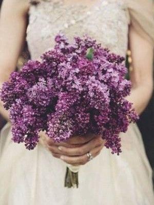 lilac_19