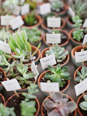 plants_08
