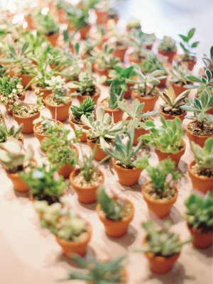 plants_10