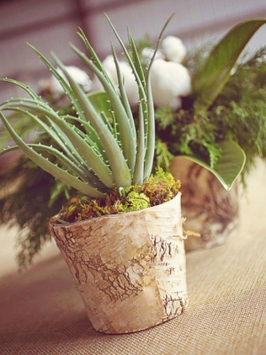 plants_37