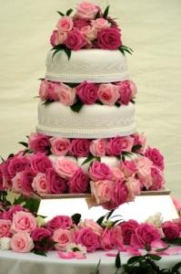 wedding-cake-roses-pink-roses-white-and-pink-wedding-rose-lover