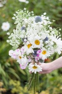 wild_flowers_13